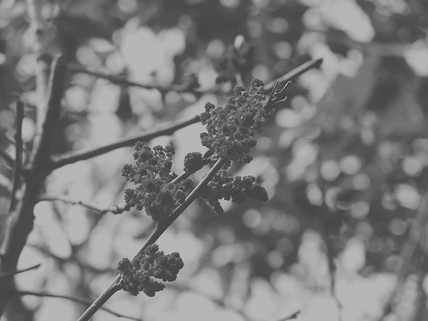 IMG_7248_edited.jpg
