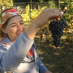 in the vineyard 2.JPG