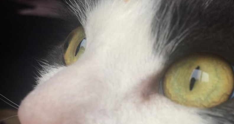 cat15_edited.jpg
