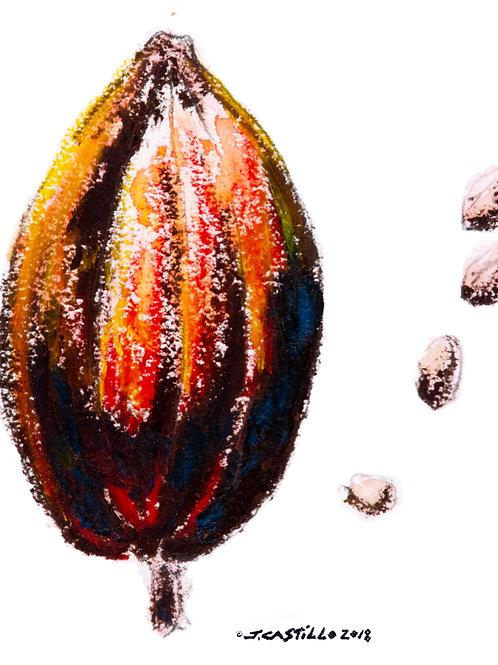 Cocoa Pod 1