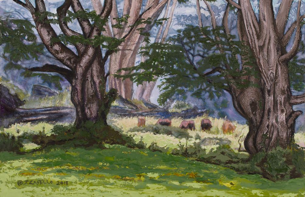 Hawaiian Misty Pasture