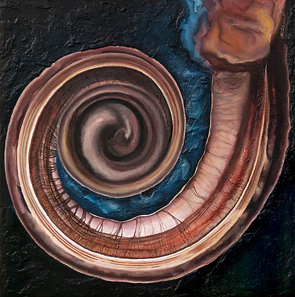 """Slice"" from the Cochlea Suite"