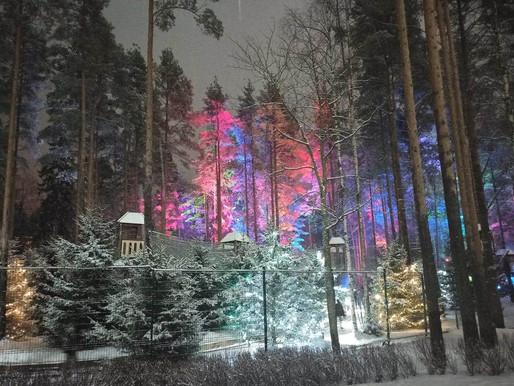 Охта-парк. Сказка зимнего леса..