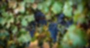 9086_madrona.jpg