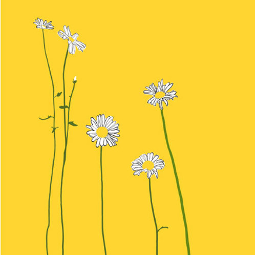 Daisies on Yellow greetings card