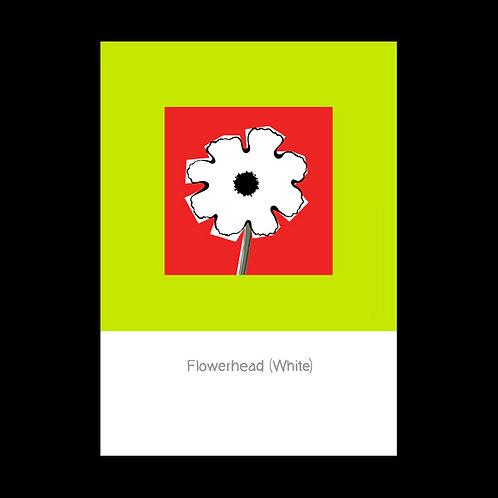 Flowerhead White POSTCARD