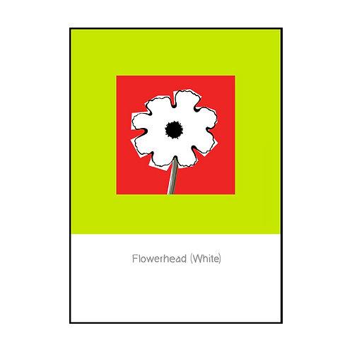 Flowerhead (White) Postcard