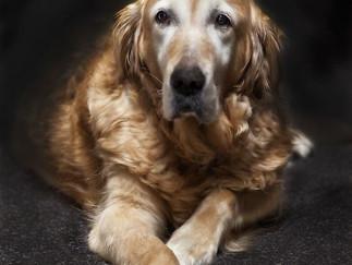 LGIM:  Old Dogs Matter