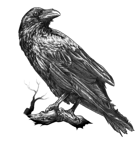 kisspng-american-crow-raven-drawing-rook