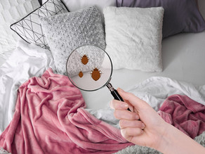DO YOU KNOW ???? YOUR BED IS A CULTURE PLATE OF BACTERIA