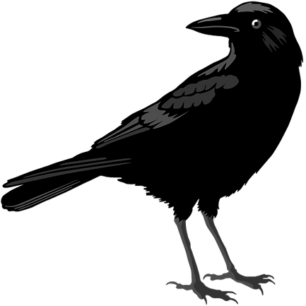 Crow_Standing.png