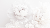 Bai Yu Lan | Fragrance | Candle | Be Loved | Magnolia Blossoms | Fresh And Elegant