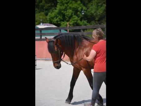 L'équitation librement consentie