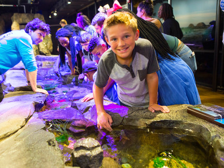Dive Into Fun at Camp Aqua at Shreveport Aquarium