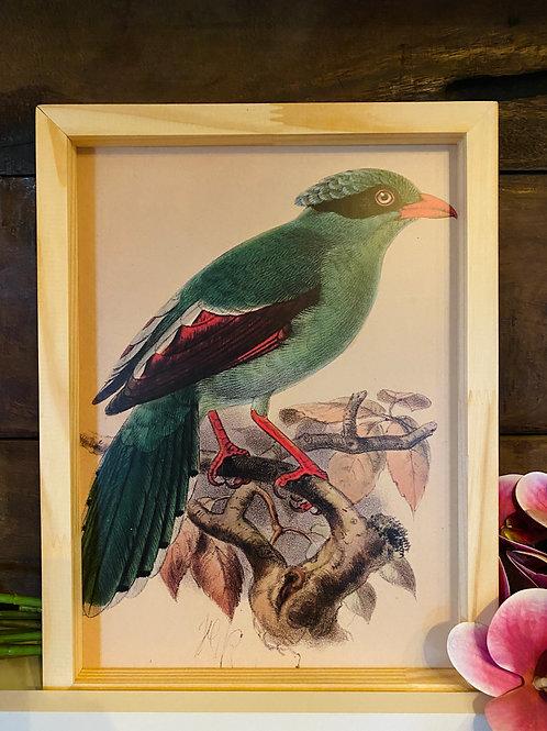 Qd pássaro verde