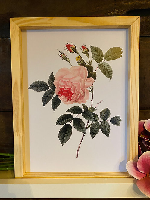 Qd rosa fundo branco