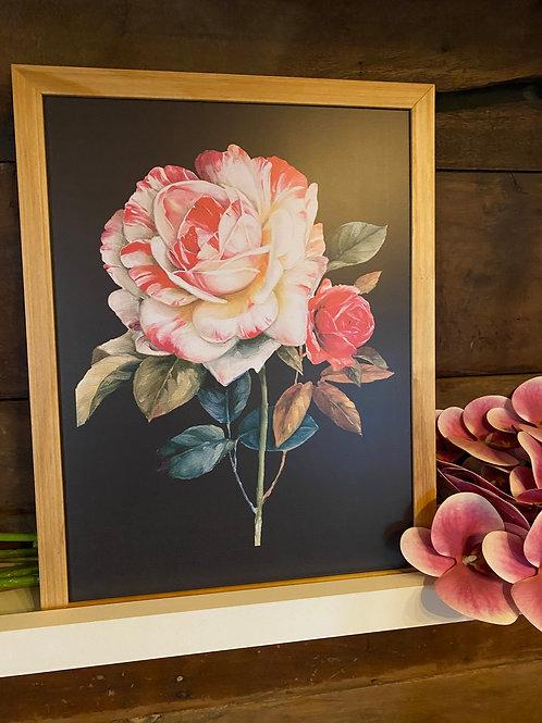 Qd de rosa vermelha e branca