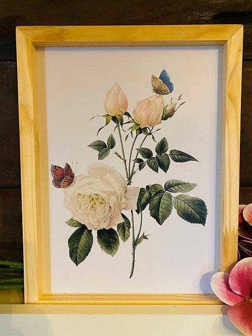 Qd rosas brancas