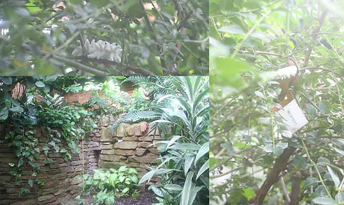 Tropical-ravine-collage.jpg