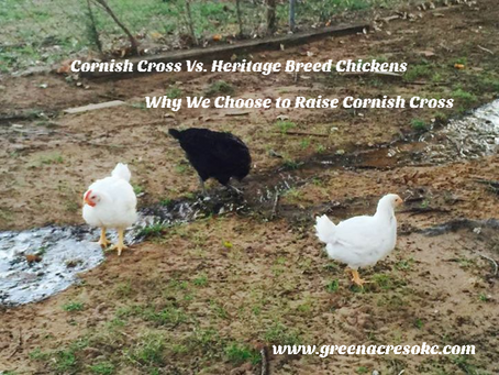 Heritage Breed vs. Cornish Cross -             A tale of 2 chickens