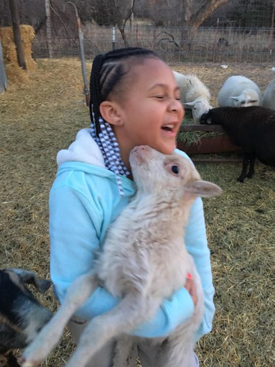 Small Farm Animal Party Booking