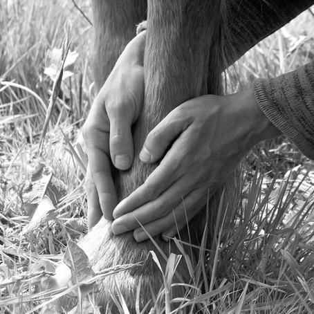 Atelier pratique d'ostéopathie à la ferme. Du palper à l'émotion. Les 4 et 18 novembre 2019