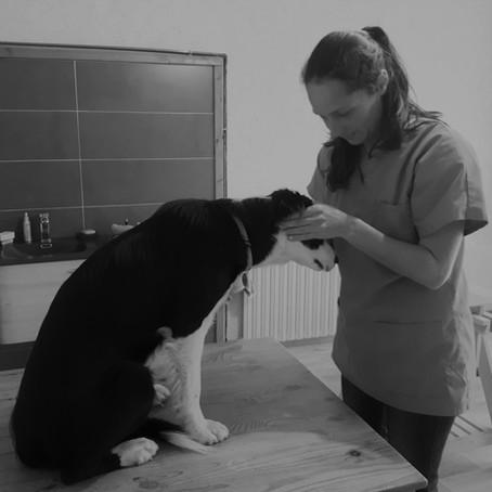 Télémédecine vétérinaire. Quelle relation souhaitons nous avoir demain ?