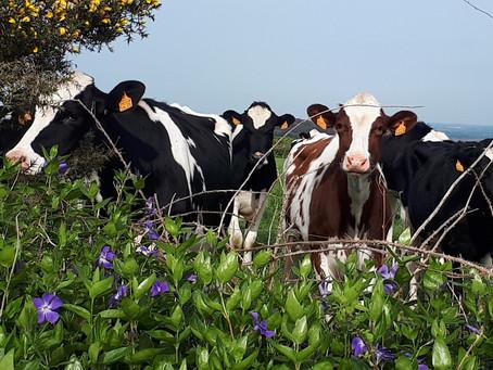 Visites en élevage. Créneaux du mois de mai