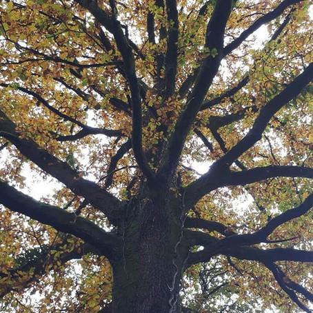 Diarrhée d'automne.. un syndrome de saison ?