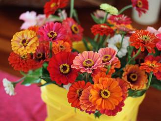 Flower Friday - Zinnias