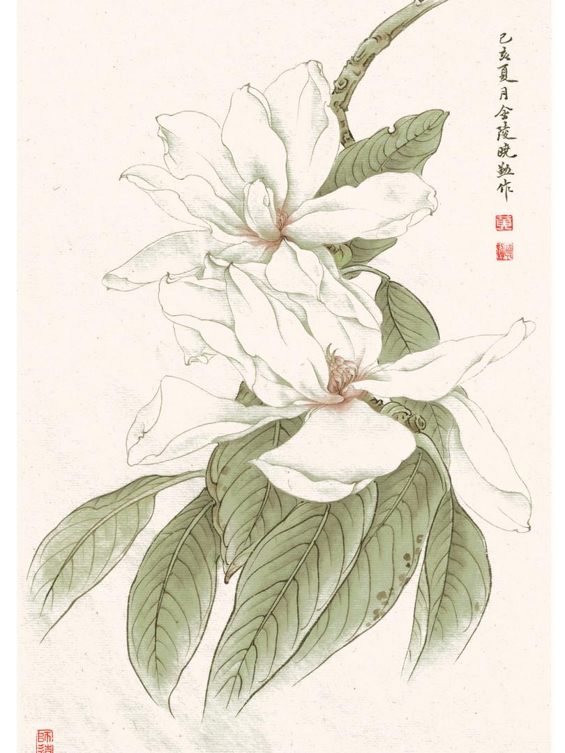 Magnolia doltsopa by Janny Huang