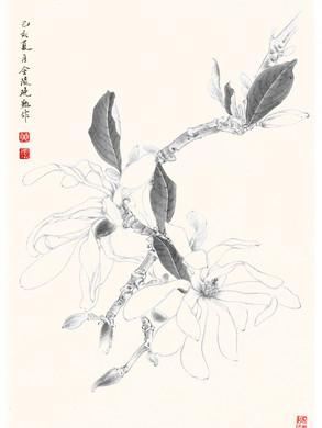 Magnolia stellata 'Waterlily' by Janny Huan