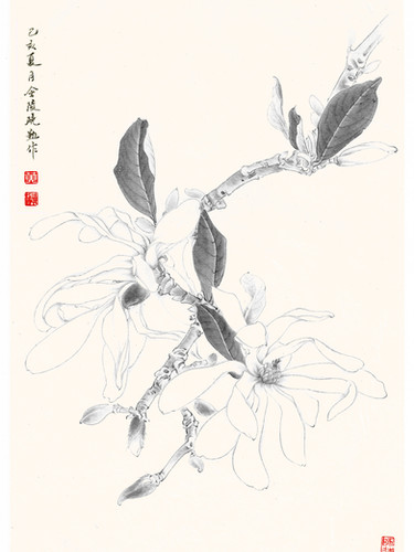 Magnolia stellata 'Waterlily' by Janny Huan