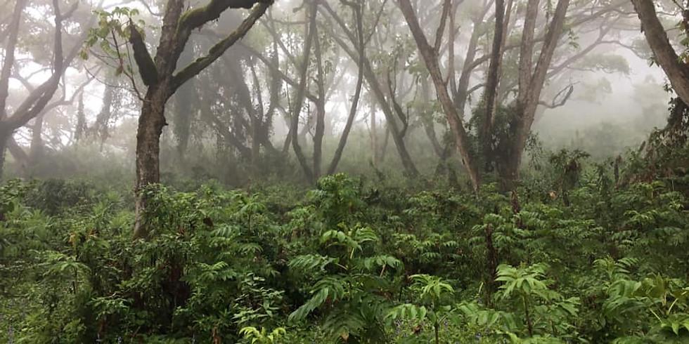 Protecting Plants Through Partnerships – Exploring Kenya's Endangered Flora