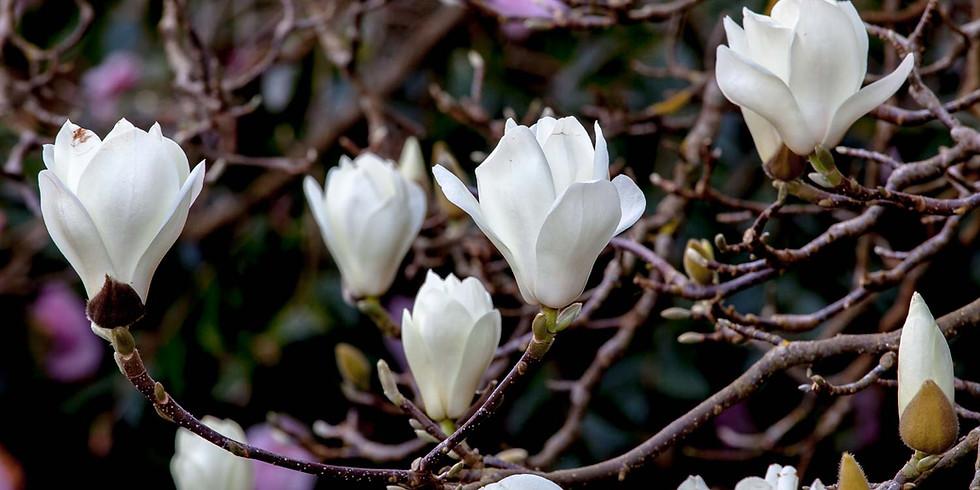 Magnolia Lunch & Learn