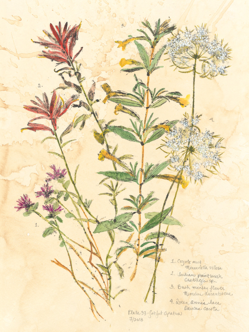 Coyote mint, Coast Indian paintbrush, Sticky monkey flower, Wild carrot