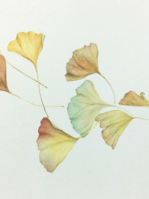 Ginkgo Leaves by Nikky Wang