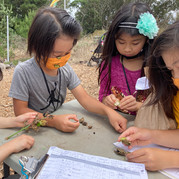 Youth Education at SF Botanical Garden
