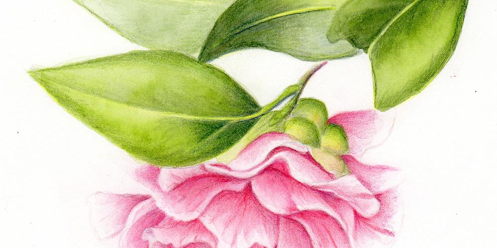 Botanical Illustration: Camellias and Magnolias