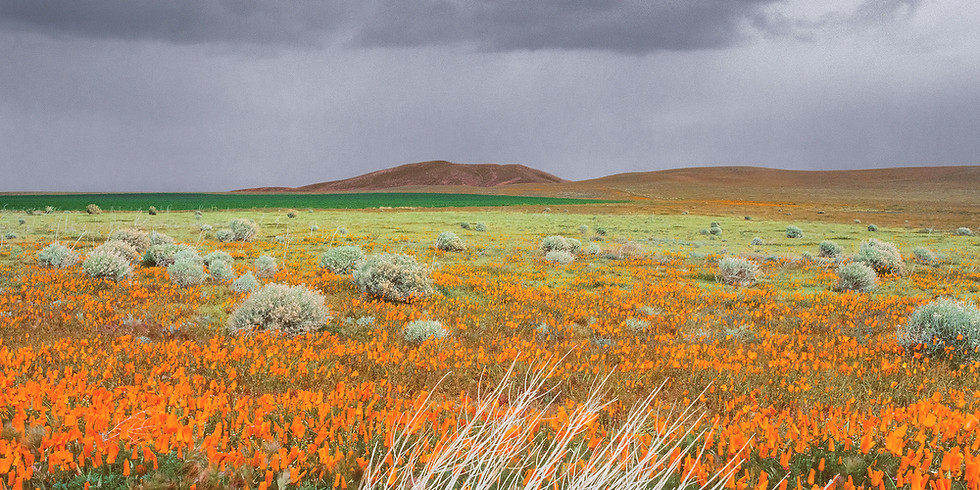 A 27 Year Wildflower Journey: The Making of Beauty and the Beast: California Wildflowers and Climate Change - Recording