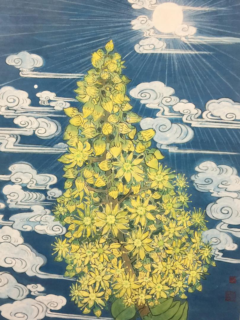 Sun Aeonium arboreum by Joseph Yan.jpg