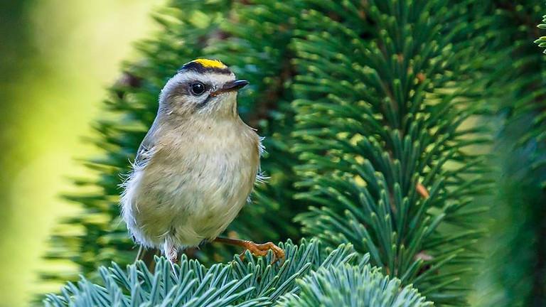 Birding at the Garden with Golden Gate Audubon