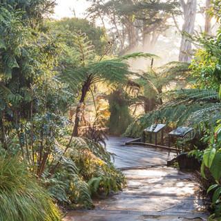Ancient Plant Garden