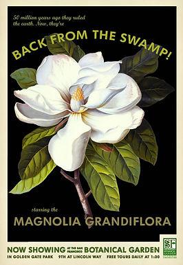 Magnolia poster image.jpg