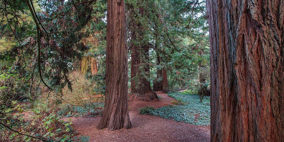 State of the Redwoods
