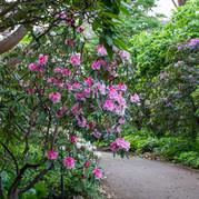 Spring in the Rhododendron Garden