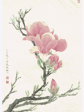 Magnolia campbellii by Janny Huang