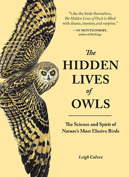 hidden lives of owls.jpg