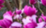 Hi Res Lead Image 2019 - Magnolia campbe