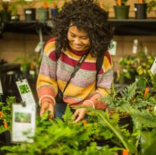 Plant Sale Cutomer Peruses
